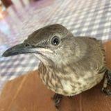 Mijn vogelhuisdier royalty-vrije stock foto