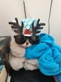 Mijn vriendented liefde is liefde met ted Ted beens daar voor ooit lafe is het leven royalty-vrije stock afbeelding
