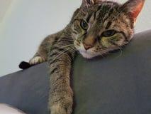 Mijn zoete het koelen kat Royalty-vrije Stock Fotografie
