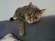 Mijn zoete het koelen kat Stock Foto's