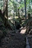 Mijnhol op het Eiland van Vancouver stock afbeelding
