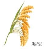 Mijo amarillo aislado en blanco Ejemplo realista del vector del cereal stock de ilustración