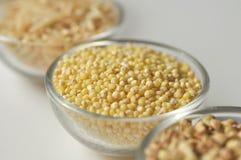 Mijo - el gluten libera el grano Imagenes de archivo
