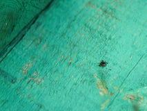 Mijtinsect, blood-sucking parasiet, de lente, verslechtering, zacht, Lyme-ziekte, hersenontsteking royalty-vrije stock afbeelding