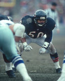 Mike Singletary, Linebacker,  Chicago Bears Royalty Free Stock Images