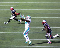 Mike Wallace Miami Dolphins royaltyfri foto
