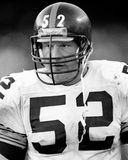 Mike Webster Stock Images