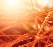 Miękka ostrości trawa z kroplami Zdjęcie Royalty Free