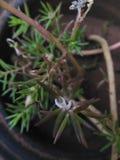 Mikro kwiat Obrazy Royalty Free