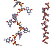 Mikro-Molekül der RNS (mir-423-5p) Stockfotografie