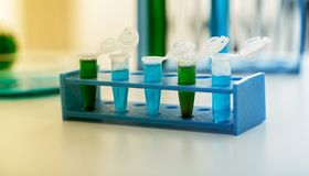 Mikro tubki z biologicznymi próbkami w laboratorium Zdjęcie Royalty Free