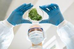 Mikrobiolog analizuje zieloną substancję obraz royalty free
