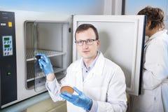Mikrobiolog ręka kultywuje Petri naczynia whit oczkowanie zapętla, obok autoklawu Fotografia Royalty Free