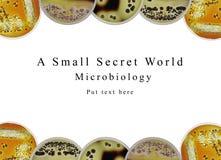 Mikrobiologi för Powerpointpresentationsbakgrund, petri maträtt och Royaltyfria Bilder
