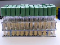 mikrobiologia mediów Zdjęcia Royalty Free