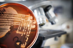 Mikrobiologie Stockbild