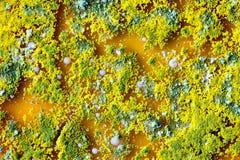 Mikrobiologii tło robić kolonie Zdjęcia Stock