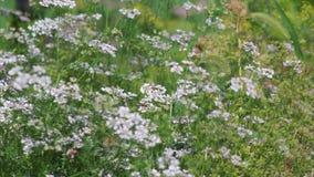 Mikrokosmos ogrodowe rośliny zdjęcie wideo