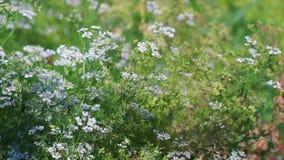Mikrokosmos ogrodowe rośliny zbiory