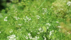 Mikrokosmos ogrodowe rośliny zbiory wideo