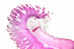 Mikroskopii fotografia Małego jelita transwersalna sekcja obrazy royalty free