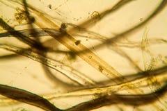 Mikroskopische Ansicht des Staubes Stockbilder