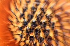 Mikroskopisk phot med organismer och abstrakt begreppformer Royaltyfri Bild