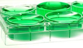 Mikrotiterplatte mit grüner Flüssigkeit Stockbild
