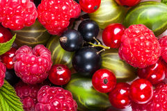 Mikstura dojrzałe soczyste owoc i jagody na białym tle Malinki, rodzynki, agresta zakończenie Piękni owocowi półdupki Zdjęcie Royalty Free