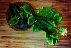 mikstura ziele Zdjęcie Stock
