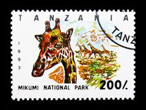 Mikumi National Park, Giraffe Giraffa camelopardalis, National Parks serie, circa 1993. MOSCOW, RUSSIA - JANUARY 2, 2018: A stamp printed in Tanzania shows Stock Images