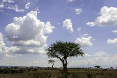 Mikumi National Park. The Mikumi National Park under the sunshine in Tanzania Royalty Free Stock Images