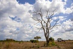 Mikumi National Park. The Mikumi National Park under the sunshine in Tanzania Royalty Free Stock Photo
