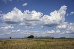 Mikumi National Park. The Mikumi National Park under the sunshine in Tanzania Royalty Free Stock Image