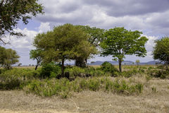 Mikumi National Park. The Mikumi National Park under the sunshine in Tanzania Stock Photo