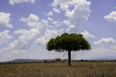 Mikumi National Park. The Mikumi National Park under the sunshine in Tanzania Stock Images