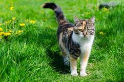 Miky katt Fotografering för Bildbyråer