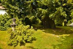Mil años del árbol de tilo imagen de archivo