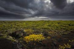 Mil av Lava Rock Covered i mossa i Island Arkivbilder