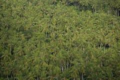 Mil da árvore de coco Imagens de Stock Royalty Free