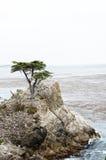 17 mil Drev-ensam cypress Royaltyfri Foto