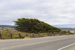 17 mil drevlandskap på Stillahavskusten, Monterey, Kalifornien Arkivbilder