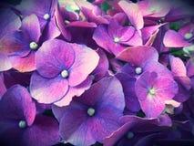 Mil floraciones de las flores Imágenes de archivo libres de regalías