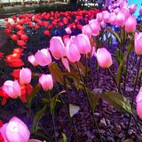 Mil flores fotografia de stock royalty free