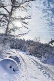 Milagre do inverno Fotos de Stock Royalty Free