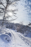 Milagro del invierno fotos de archivo libres de regalías
