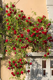 Milan, balcony with red roses Stock Photo