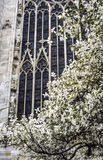 Milan - Duomo and magnolia Royalty Free Stock Photo