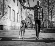 Milan Italien - mars 23, 2016: Gå mannen med en hund på italienare Royaltyfri Fotografi