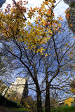 Milan Italy: autumn in the city Royalty Free Stock Images